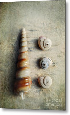 Shells On Beach Wood Metal Print by Lyn Randle