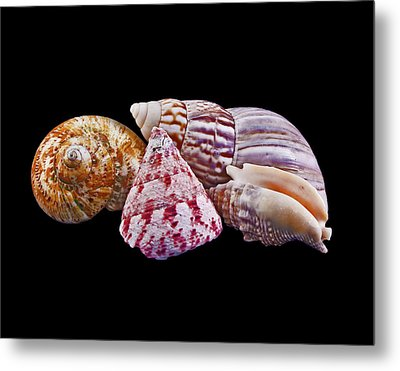 Metal Print featuring the photograph Shells On Black by Bill Barber