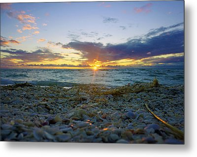Shells On The Beach At Sunset Metal Print by Robb Stan