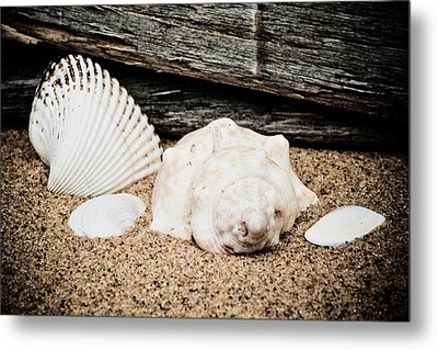 Shells On The Beach Metal Print by David Hahn