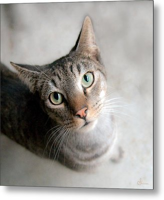 Shelter Cat Metal Print by Sally Mitchell
