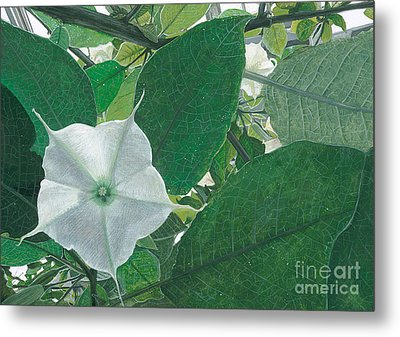 Sheltered From The Sun Datura Metal Print