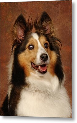 Metal Print featuring the photograph Sheltie by Greg Mimbs