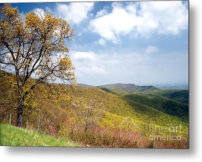 Metal Print featuring the photograph Shenandoah by Nigel Fletcher-Jones