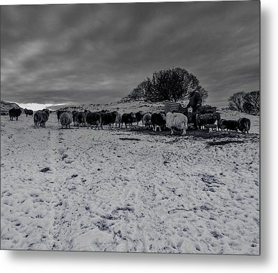 Metal Print featuring the photograph Shepherds Work by Keith Elliott