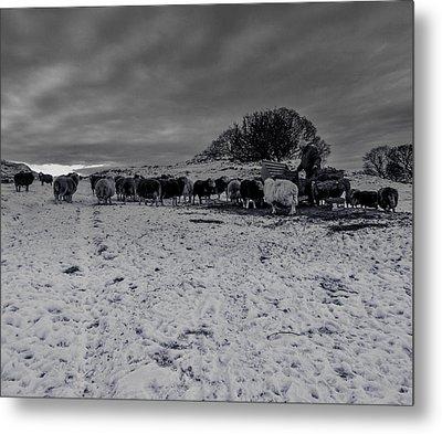 Shepherds Work Metal Print by Keith Elliott
