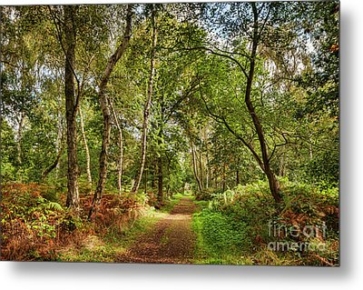 Metal Print featuring the photograph Sherwood Forest, England by Colin and Linda McKie