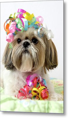 Shih Tzu Dog Metal Print by Geri Lavrov