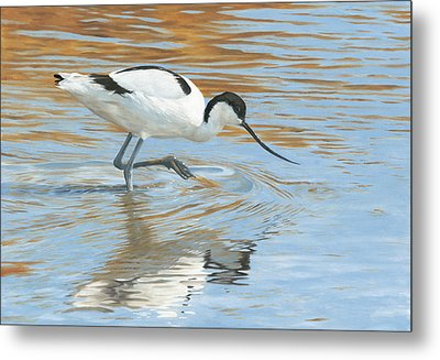 Shimmer Metal Print by Clive Meredith