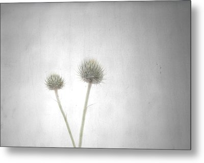 Shine Metal Print by Mark Ross