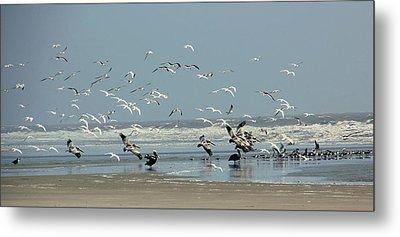 Shorebirds On The Beach Metal Print by Rosanne Jordan