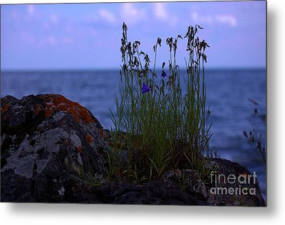 Shoreline Beauties Metal Print by The Stone Age