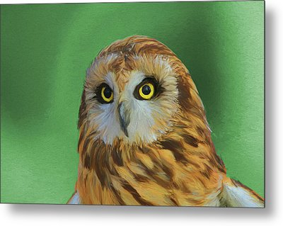 Short Eared Owl On Green Metal Print by Dan Sproul