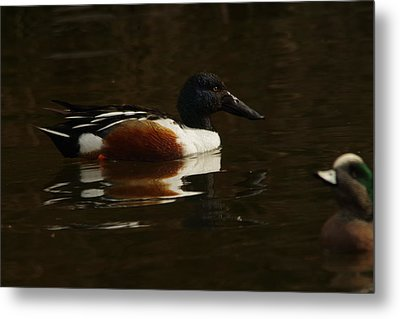 Metal Print featuring the photograph Shovel Tail And A Wigeon by Jeff Swan