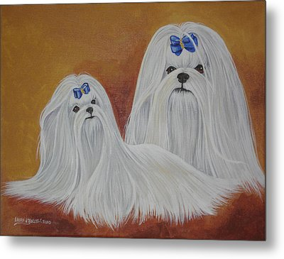 Show Maltese Metal Print by Laura Bolle