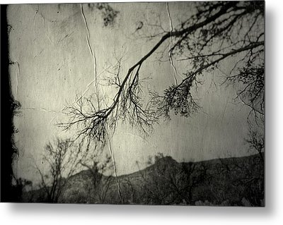 Show Me  Metal Print by Mark Ross