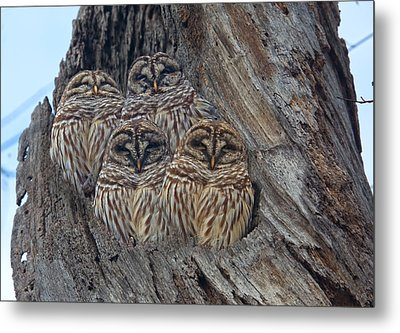 Show Me Your Hooters Metal Print by Betsy Knapp