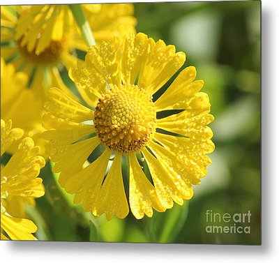 Showered With Love Metal Print by Anita Oakley