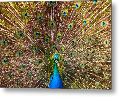 Showing Your Colors Metal Print by Mike  Dawson