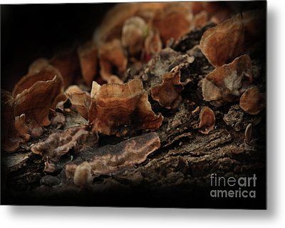 Metal Print featuring the photograph Shrooms by Kim Henderson