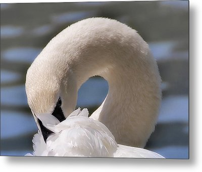 Metal Print featuring the photograph Shy Swan by Elaine Manley