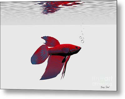Siamese Fighting Fish Metal Print by Corey Ford