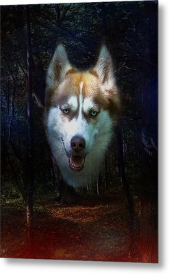 Siberian Husky Metal Print by Brian Roscorla