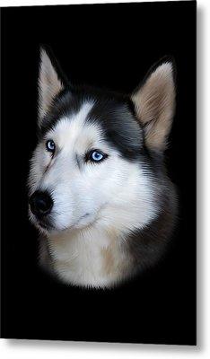 Siberian Husky Dog Metal Print by Julie L Hoddinott