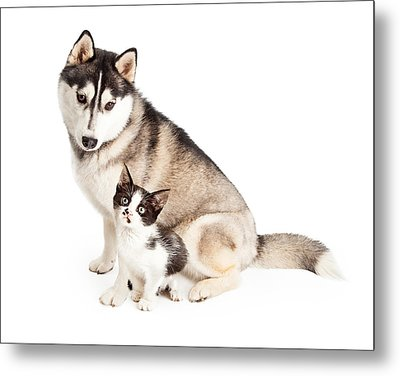 Siberian Husky Dog Sitting With Little Kitten Metal Print