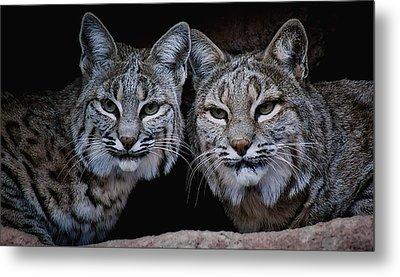 Metal Print featuring the photograph Side By Side by Elaine Malott