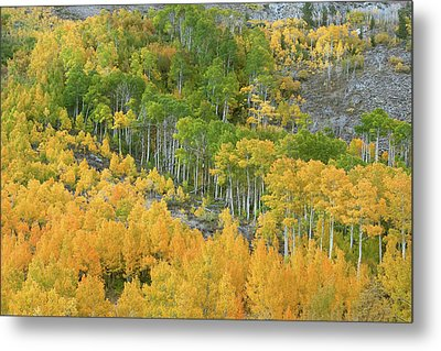Metal Print featuring the photograph Sierra Autumn Colors by Ram Vasudev