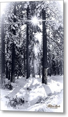 Sierra Forest Show Metal Print by William Havle