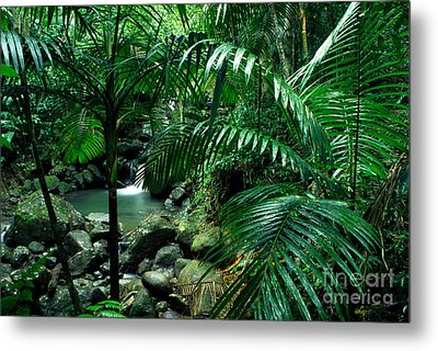 Sierra Palms Waterfall El Yunque Metal Print by Thomas R Fletcher