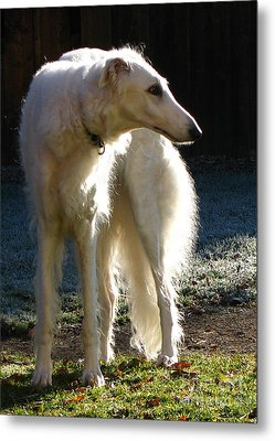 Metal Print featuring the photograph Sighthound by Deborah Johnson