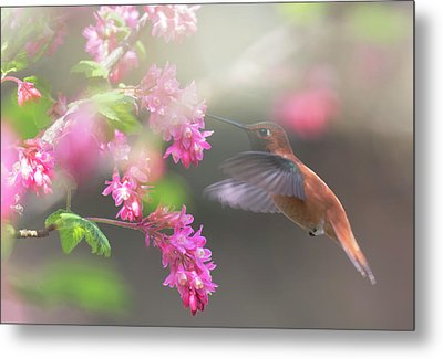 Sign Of Spring 2 Metal Print by Randy Hall
