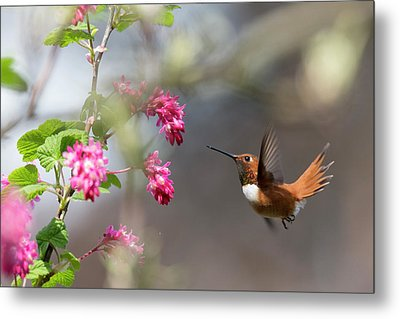 Sign Of Spring 3 Metal Print by Randy Hall