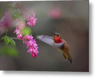 Sign Of Spring Metal Print by Randy Hall