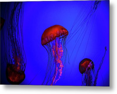 Metal Print featuring the photograph Silent Jellies by Jeff Folger