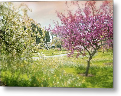 Metal Print featuring the photograph Silent Wish You Make by Diana Angstadt