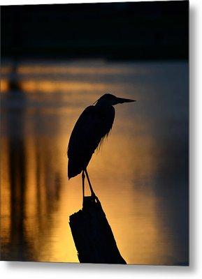 Silhouette At Sunset Great Blue Heron Metal Print