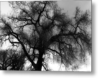 Silhouette Metal Print by James BO  Insogna