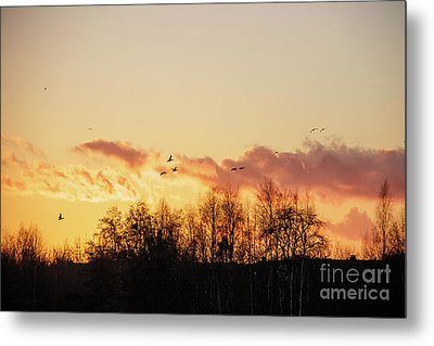 Silhouette Of Birds Wildfowl Geese Flying Off To Roost At Sunset Metal Print