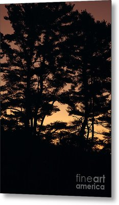 Silhouette Of Forest  Metal Print by Erin Paul Donovan