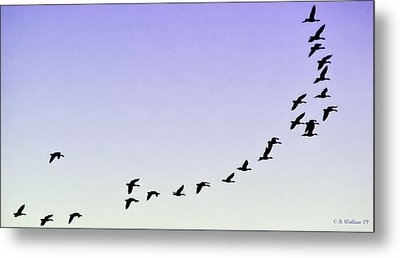 Silhouetted Flight Metal Print by Brian Wallace