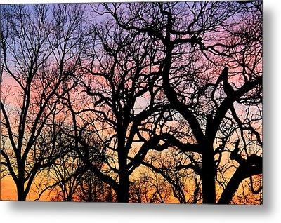 Metal Print featuring the photograph Silhouettes At Sunset by Chris Berry