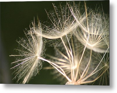 Metal Print featuring the photograph Silken Seed Parachutes by Peg Toliver