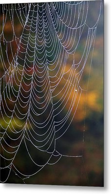 Silken Threads Metal Print by Elsa Marie Santoro