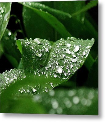 Metal Print featuring the photograph Silver Drops Of Spring by Al Fritz