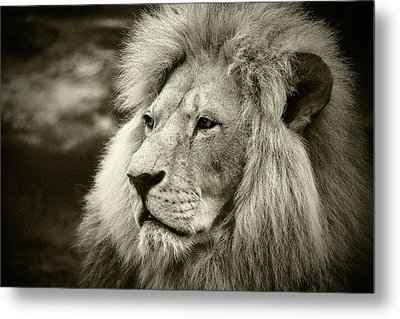 Metal Print featuring the photograph Simba by Stefan Nielsen