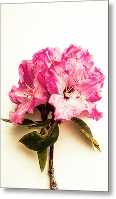 Simple Beauty Metal Print by Jorgo Photography - Wall Art Gallery